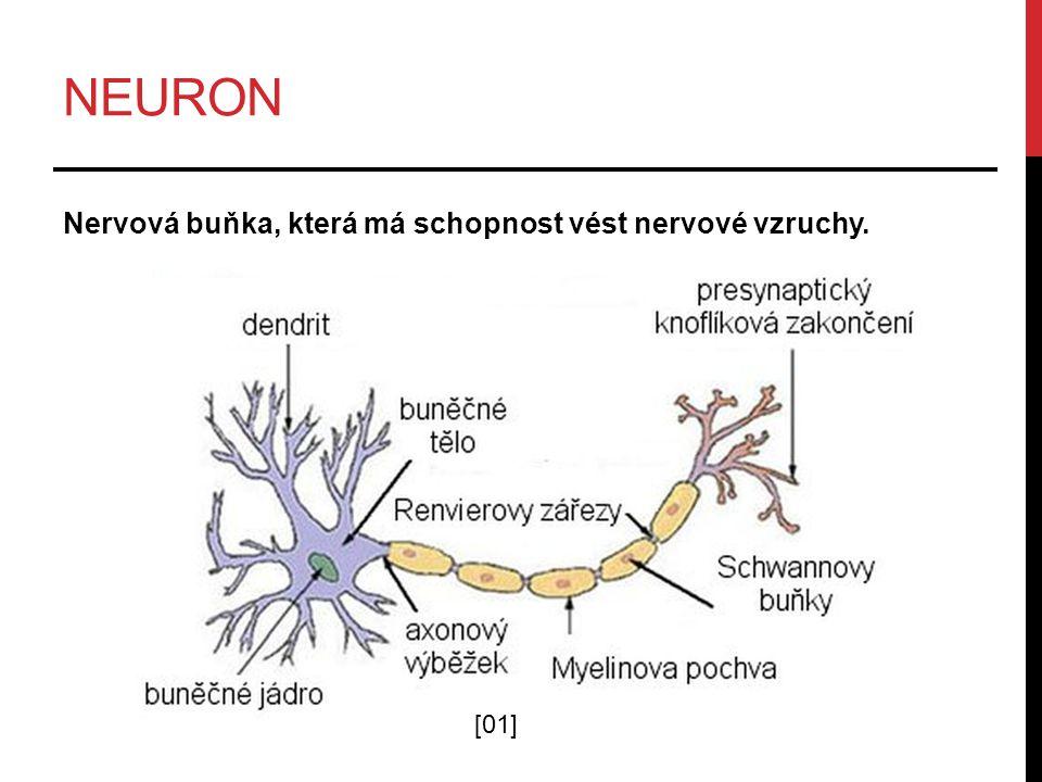 neuron Nervová buňka, která má schopnost vést nervové vzruchy. [01]